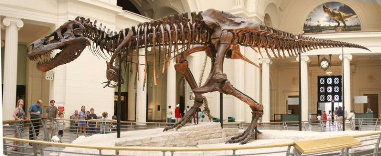 Maior fóssil de Tiranossauro Rex é encontrado nos EUA