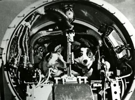 A bordo da Sputnik 5, cães Belka e Strelka retornam à Terra