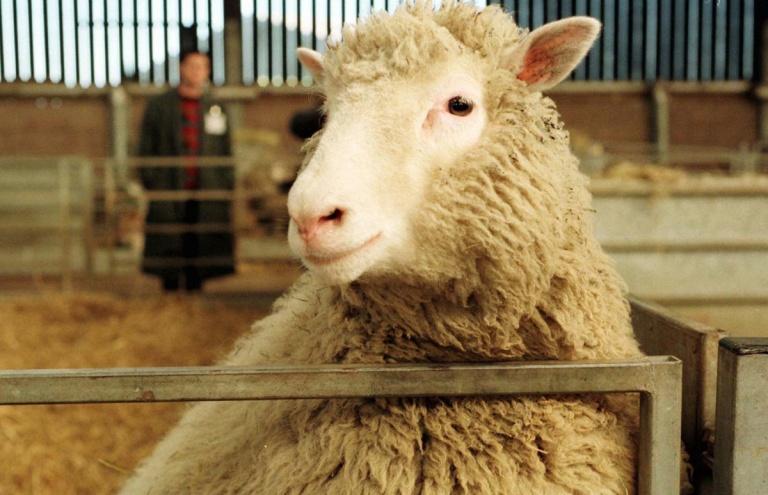 Nasce a ovelha Dolly, primeiro mamífero clonado